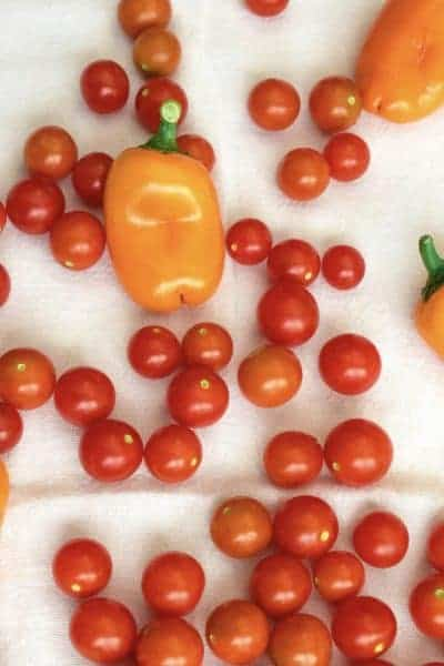 yellow bell peppers and red cherry tomatoes on a white towel