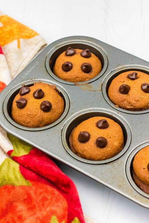 muffin pan filled with pumpkin chocolate chip muffins