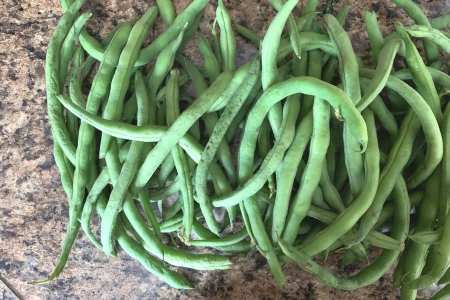 fresh green beans to be prepared for cooking in the Instant Pot pressure cooker