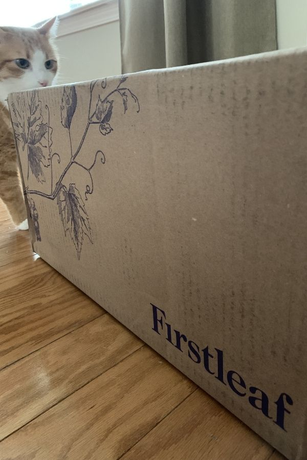 firstleaf wine box with a cat sniffing it